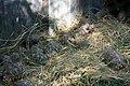 ডুলাহাজারা সাফারি পার্কে কচ্ছপ ১.jpg