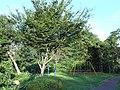 くわがた公園 Kuwagata Park - panoramio.jpg