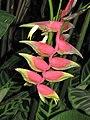 垂序蝎尾蕉(金鳥赫蕉) Heliconia rostrata -香港公園 Hong Kong Park- (9207601232).jpg