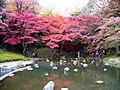 小石川植物園(2009.11.28撮影) - panoramio (6).jpg