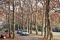 树林 - panoramio.jpg
