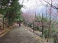 碧絡角 Biluojiao - panoramio (2).jpg