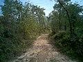 通往西沟的路 - panoramio.jpg