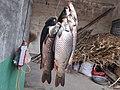 铁丝串起的一串鱼.jpg