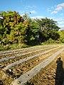 0126jfLandscapes Sunsets Fields Maronquillo San Rafael Bulacanfvf 22.JPG