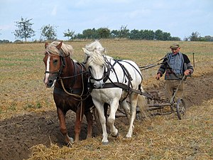 Plough - Traditional ploughing: a farmer works the land with horses and plough