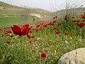 1390 - panoramio (13).jpg
