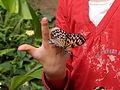 183 Schmetterlingspark Uslar.JPG