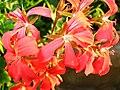 1864 - Salzburg - Mirabellgarten - Flowers.JPG