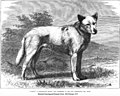 1875-esquimaux-dogs 02.jpg