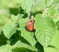 2006-07-16 larve5.jpg