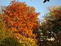 2011-10-31-155319 .JPG - panoramio.jpg
