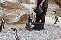 2015-05-24 Vogelpark Marlow 15.jpg