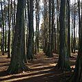 2015-07-10 13.48.14 Sombra das árvores.jpg