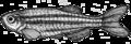 201606 09 zebrafish.png