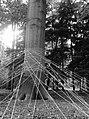 2016 Gullivers tree - Maarten Brinkman.jpg