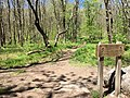 2017-05-16 12 04 48 View south along the Appalachian Trail at the junction with the Virginia Highlands Horse Trail at Deep Gap, on the west side of Mount Rogers, within the Lewis Fork Wilderness in Smyth County, Virginia.jpg