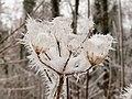 2021-01-16 14-58-09 gelée-blanche.jpg