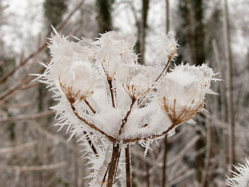 Photos du 16/01/2021 800px-2021-01-16_14-58-09_gel%C3%A9e-blanche