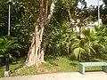 22Mehan Garden Ermita Manila Alexander Pushkin 48.jpg