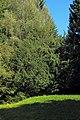 2 Eiben in Hirschenwies 02 2014-09 NÖ-Naturdenkmal GD-141.jpg
