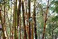 333, Taiwan, 桃園市龜山區龜山里 - panoramio (31).jpg