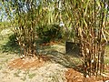 43Lubao Bamboo Hub & Eco-Park Santa Catalina Pampanga 33.jpg