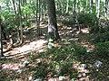 4760755 20050927 0038 Rip Rap Trail campsite -755 (32813392623).jpg