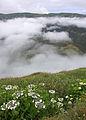 Açores 2010-07-23 (5155308456).jpg