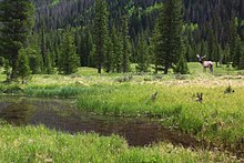 Bull Elk In A Meadow Several Miles Downstream From The Headwaters Of The Colorado River