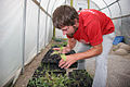 A Mississippi National River and Recreation Area volunteer checks seedlings inside a greenhouse.jpg