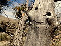 A Smile in a Tree.jpg