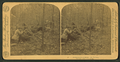 A chance of a lifetime - my venison, by Barker, George, 1844-1894.png
