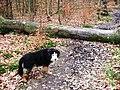 A fallen tree blocks the way - geograph.org.uk - 1191343.jpg