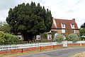 A house and yew, Fox Road, Mashbury, Essex, England.JPG