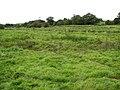 A large sheep pasture - geograph.org.uk - 1012352.jpg