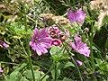A other Flower in my Garden.jpg