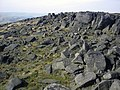 A sea of boulders at Blackstone Edge - geograph.org.uk - 271260.jpg