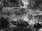 A shady nook, Dapto Creek (2415284960).jpg