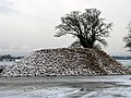 A snow-covered heap of sugar beet - geograph.org.uk - 1623946.jpg