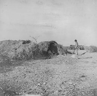 Tiburón Island Tragedy - An abandoned Seri village on Tiburón Island in 1895
