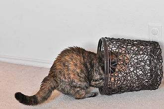Cat communication - A tortoiseshell cat with erect hairs on its tail and back which in this context indicates excitement or curiosity