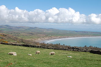 Aberdaron - Sheep graze on the rise above Porth Neigwl where wrecking took place