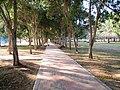 Abudhabi City park - panoramio (4).jpg