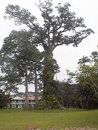 Aburi botanical gardens.jpg