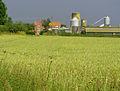 Acron Hill Farm Nunkeeling.jpg