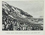 Adélie-penguin-Cape-Verde-1899-Carsten-Borchgrevink-groups.jpg