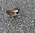 Aire du Creux Moreau (juin 2020) un petit oiseau pas farouche.jpg