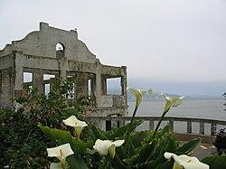 Alcatraz Island Flowers.jpg