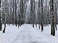 Alejka w Parku Piaskówka, styczeń 2021.jpg